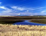 Nature1-009.JPG
